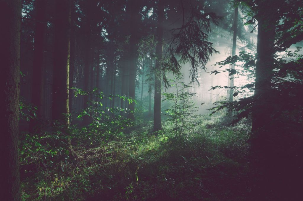 Study find that forests are losing their ability to absorb carbon dioxide